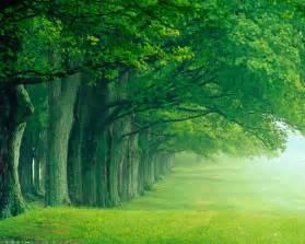 green forest best trees position okay wallpaper