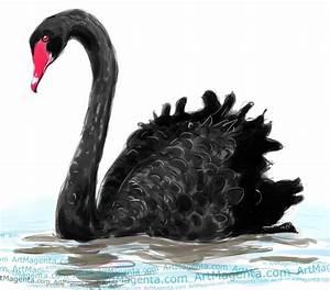 Birds: Black Swan