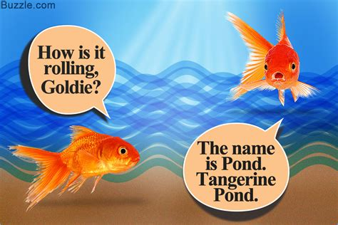 Cute And Funny Names For Your Pet Fish That Will Crack You Up