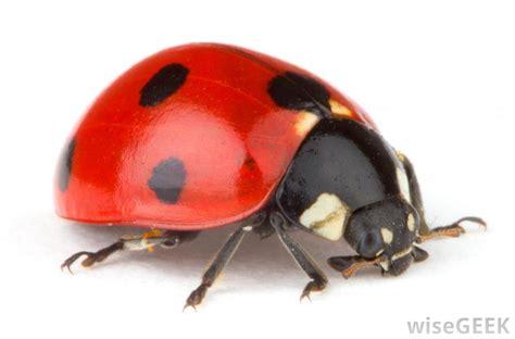 types  ladybug decor  picture