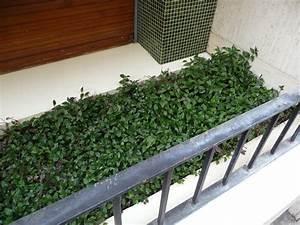 Plantes D Hiver Extérieur Balcon : plante d appartement paris c t jardin ~ Nature-et-papiers.com Idées de Décoration