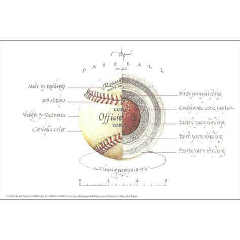 anatomy  baseball  print