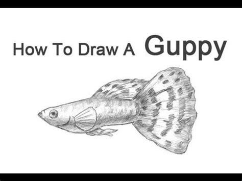 draw  fish guppy youtube