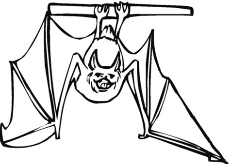 Bat Hanging Upside Down Coloring Page  Free Printable