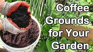 how much coffee do we use in the garden coffee grounds