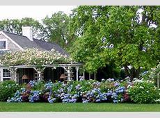 Image Gallery hydrangea garden design