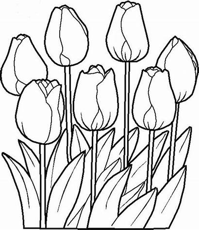 Tulip Coloring Pages Nature Printable Craft