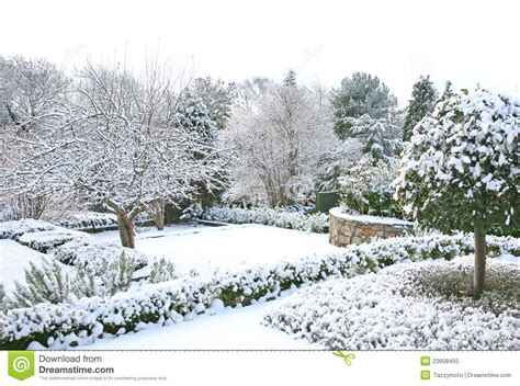 landscaping in winter winter garden royalty free stock photo image 23608455