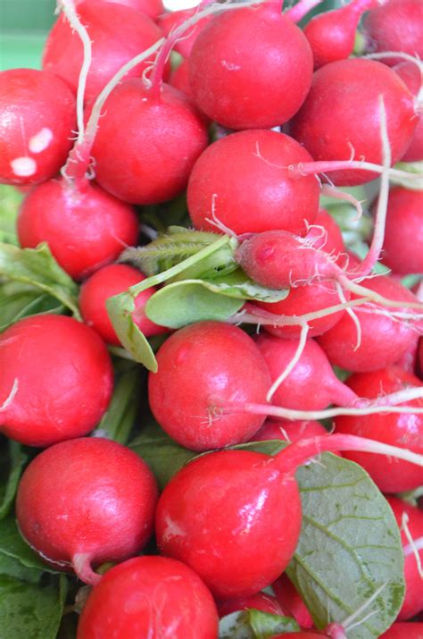 cuisiner les feuilles de radis radis et le radis ostergruss ferme pulvermühle