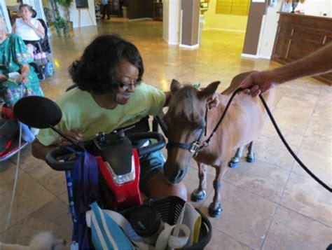 service miniature horses animals horse animal kjzz they mesa court grand dogs