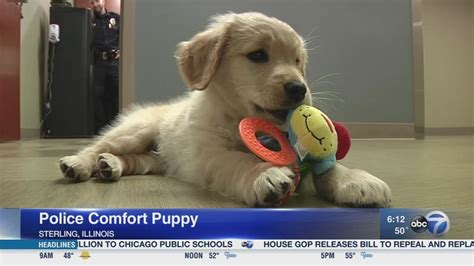 k 9 comfort dogs department k9 trains as comfort 6abc
