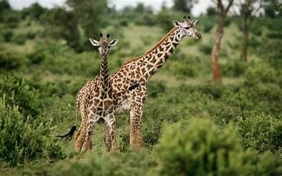 Wildlife Wallpapers Desktop Animals Backgrounds Wild Background