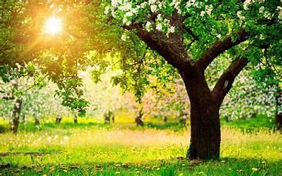 Nature Spring Scenes Desktop Wallpapers Wallpapersafari