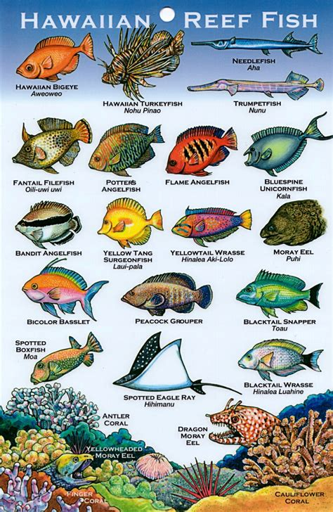 hawaiian fish hawaiian fish names  pictures