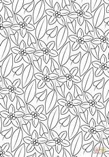 Coloring Pattern Pages Floral Printable Drawing sketch template