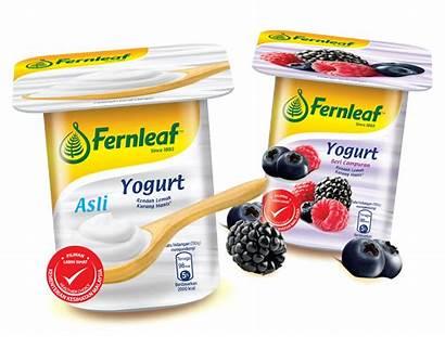 Yogurt Fernleaf Fat Low Natural Provides Healthy