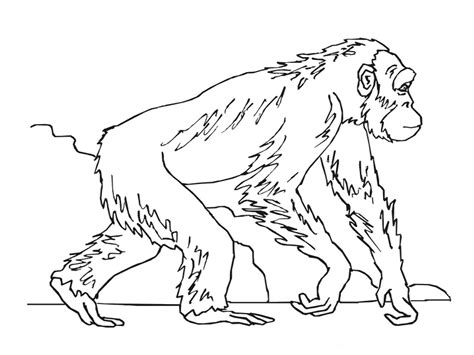 ape coloring pages kidsuki