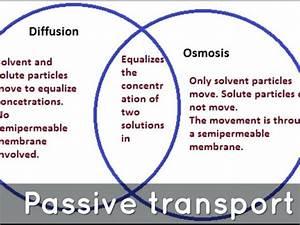 Osmosis Vs Diffusion Venn Diagram