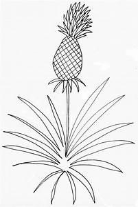 Plant D Ananas : coloriage d 39 un ananas plante t te modeler ~ Melissatoandfro.com Idées de Décoration