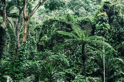 Top 10 Things To Do In The Daintree Rainforest