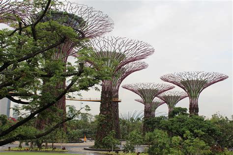 singapore botanic gardens singapore botanic gardens flight path