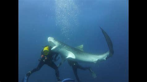 Scuba Diver Shark Attack