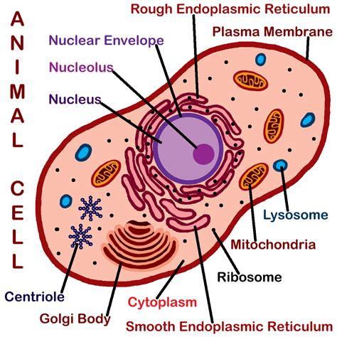 clip art basic plant anatomy labeled color abcteach