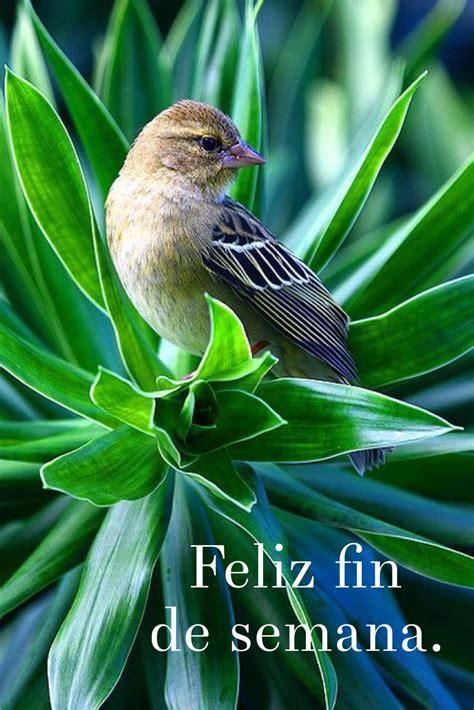 Feliz viernes / Feliz Día / Viernes / Friday / Happy