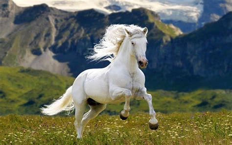 horse hd meadow mountains grass google horses desktop resolution wallpapers13 yang yin wallpapers mountain ipad