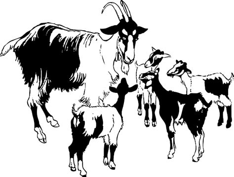Animals, Baby, Kid, Kids, Cartoon, Mammals, Goat
