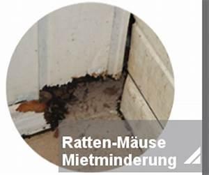 Ratten In Der Wand : rattenbek mpfung notdienst toxtron in essen oberhausen kammerj ger sch dlingsbek mpfung nrw ~ Yasmunasinghe.com Haus und Dekorationen