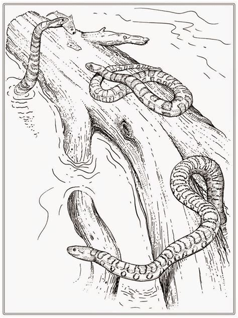 Printable Adult Coloring Pages Snake Realistic Coloring