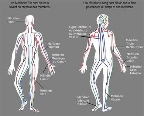 meridien du corps humain 2 l acupuncture