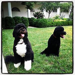 Hardly a dog's life for two pooches named Sunny - NY Daily ...