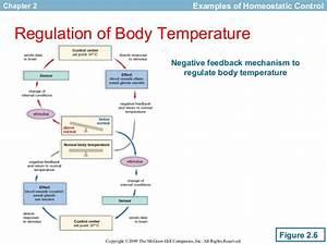 Fisiologi Senam Control Of The Internal Enviroment
