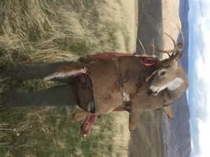 Whitetail Deer Rut 2016