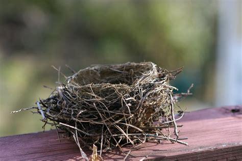 Delco Daily Top Ten: Top 10 The Bird Nest