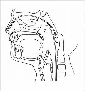 Oral Cavity Diagram Unlabeled