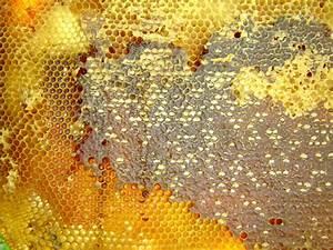 beste honing van de wereld