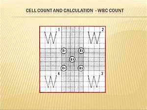 Corrected Wbc Count