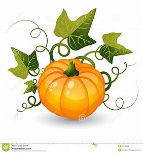 Pumpkin With Leaves Stock Vector  Illustration Of Fruit
