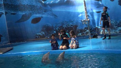 dolphin show at barcelona aquarium