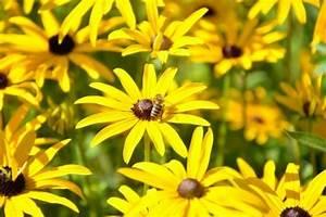 Welche Blumen Blühen Im Oktober : bienenfreundliche pflanzen eine pracht f r bienen g rten und balkone wohnideen und dekoration ~ Bigdaddyawards.com Haus und Dekorationen