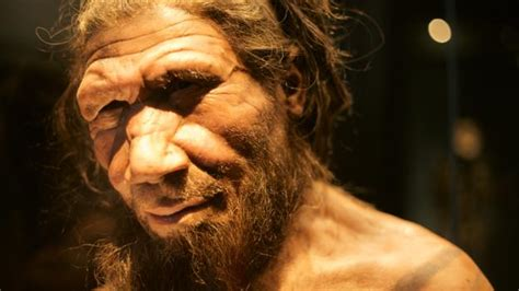 bbc earth  face    primitive