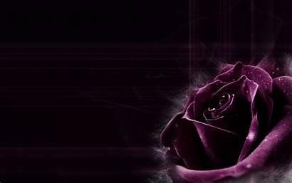 Purple Dark Rose Roses Backgrounds Becuo Wallpapersafari