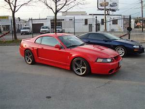 2004 Ford Mustang SVT Cobra - $29000 - Canadian Mustang Owners Club - Ford Mustang Forums