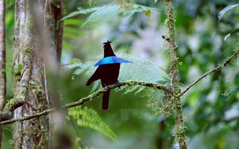 Pasalnya burung kicau merupakan burung yang akan berkicau sehingga akan membuat suasana. 21 Jenis Burung Langka Dan Unik Yang Ada Di Indonesia + Gambar