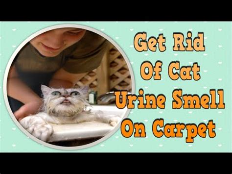 Get Rid Of Cat Urine Smell On Carpet, How To Get Rid Of