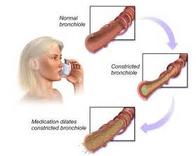 Bronchodilator Copd bronchodilator - wikipedia, the free encyclopedia  Asthma Bronchodilators