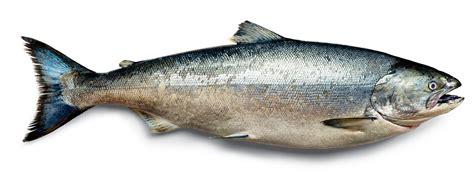 It's Wild-salmon Season